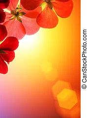 hen, blomster, solskin, rød baggrund
