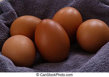 Hen Eggs Close Up
