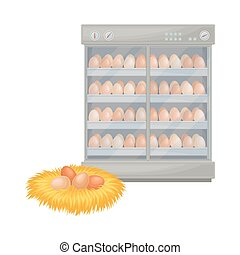 Hen Eggs in Hay Nest and Incubator Equipment Vector Illustration. Domestic Poultry Breeding for Chicken Meat Production