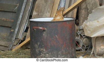 Hen in a Pot at Farm - A hen in a pot in a peasant farmyard.