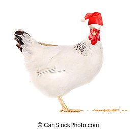 Hen in a Santas hat. - White hen in a Santas hat, isolated...