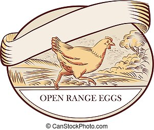 Hen Running Open Range Eggs Oval Drawing
