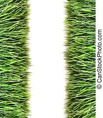 hen, udsigter, i, græs, på hvide, baggrund