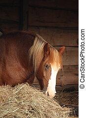 heno, caballo, comida, palomino, amarillo