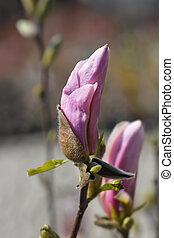 henry, george, kern, magnolia