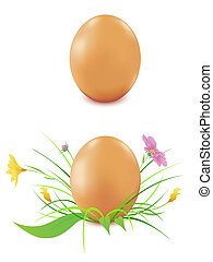 hen's eggs on a white background