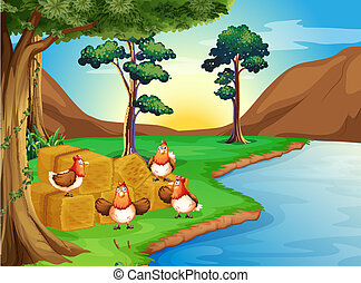 Hens near the river