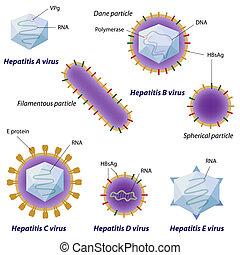 hepatite, vírus, comparação, eps10