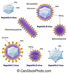 Hepatitis viruses comparison, eps10