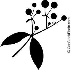 herbáceo, rubia, planta perenne, tinctorum