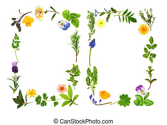 Herb and Flower Leaf Borders - Herb leaf and flower...