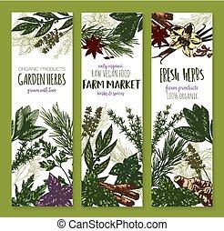 Herb and spice, fresh garden food sketch banner