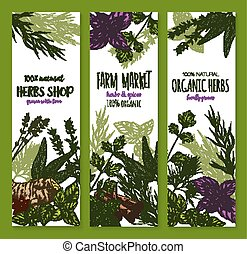 Herb and spice, natural food sketch banner set