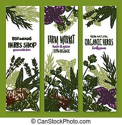 Herb and spice, natural food sketch banner set