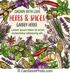 Herb and spice sketch poster of herbal food design