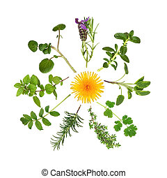 Herb and Wild Flower Abstract - Herb leaf selection in ...
