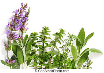 Herb Border - Border of fresh-picked herbs. Includes...