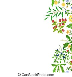 Herb border isolated on white