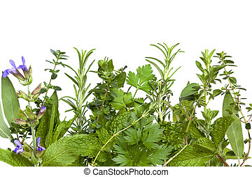 Herb Border over White - Border of fresh herbs, over white...