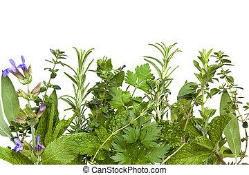 Herb Border over White - Border of fresh herbs, over white...