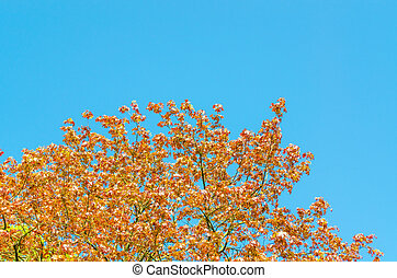 Herb-colored tree top and blue sky