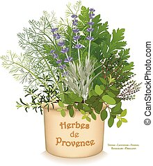 Herbes de Provence garden planter, classic blend of aromatic cooking herbs of southwestern France, left to right: Rosemary, Sweet Fennel, Italian Flat Leaf Parsley, Thyme, Oregano, Lavender, in clay flowerpot crock, isolated on white background. EPS8 compatible.