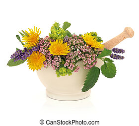 Lavender herb, valerian, ladies mantle and dandelion flower heads with aloe vera, sage and lemon balm leaf sprigs in a mortar with pestle isolated over white background.