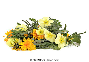 Herb leaf sprigs of lavender, rosemary and sage with wild primrose and dandelion flowers, isolated over white background. Skincare ingredients.