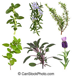 Herb Leaf Collection
