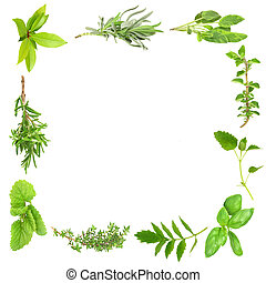 Herb Leaf Frame