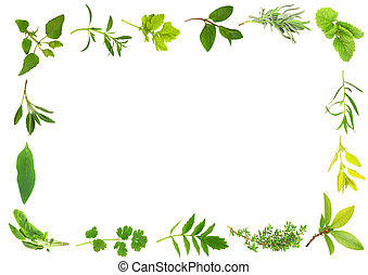 Herb Leaves - Herb leaf selection forming a frame over white...
