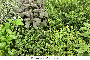 Herb Selection - Organic growing herb selection, lavender,...