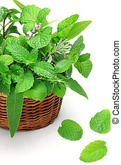 herb - I put various herb in a basket and took it in a white...
