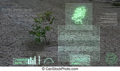 herb survival in dry land and AI analysis scan and informations