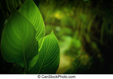 herbal - close up view of tropical plant on color back