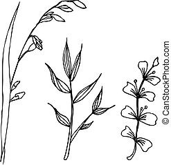 Herbal drawing isolated. Liner vector illustration on white