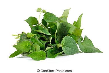 herbal, fish, mynta, bladen, isolerat, vita, bakgrund