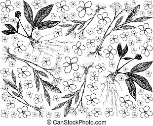 Herbal Flower and Plant, Hand Drawn Background of Valerian and Ginseng Plants Used for Traditional Medicinal.