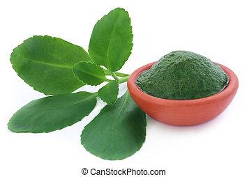 Herbal Kalanchoe