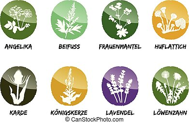 alchemilla coltsfoot teasel mullein lavender dandelion