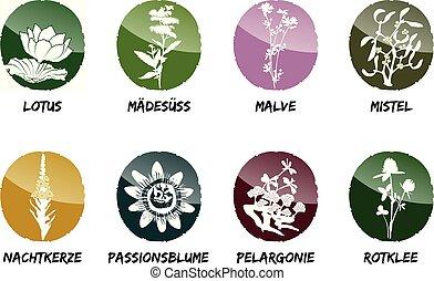 red clover mistletoe evening primrose passionflower geranium Lotus meadowsweet mallow