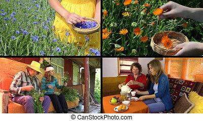 herbal medicine collage
