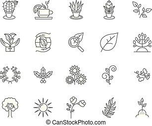 Herbal medicine line icons, signs, vector set, outline illustration concept