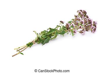 Herbal medicine:Thyme