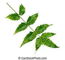 Herbal Neem leaves over white background