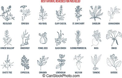 Herbal Remedies for PMS premenstrual syndrome. Hand drawn vector set of medicinal plants