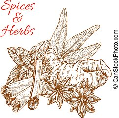 Herbal spices and vector sketch spicy herbs
