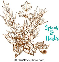 Herbal spices or spicy herbs vector sketch