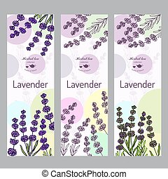 Herbal tea collection. Lavender