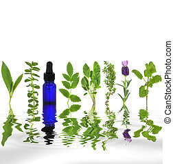 Herb leaf selection of comfrey, peppermint, valerian, sage, thyme, lavender and lemon balm with an aromatherapy essential oil glass dropper bottle with reflection in rippled grey water, over white background.